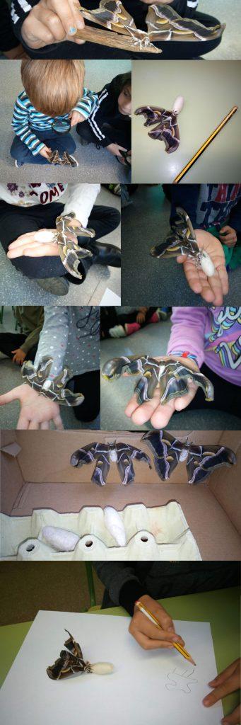 taller mariposas en la clase, ciclo vital
